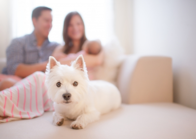 family with newborn and puppy cuddling on the sofa
