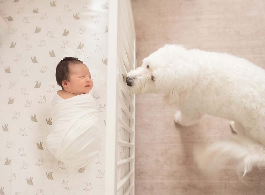 Family dog looking at a sleeping baby in the crib