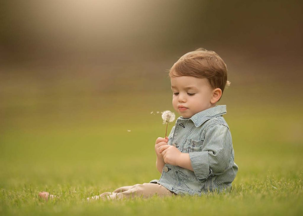 Young boy sitting in a grass field and holding a dandelion